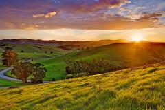 view from helen putnam regional park petaluma (paulkellr) Tags: california winter sunset green exposure cows sonoma hills lee bayarea petaluma fusion hdr gnd leefilters
