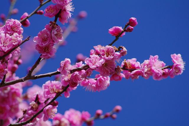 早春の筑波山2011