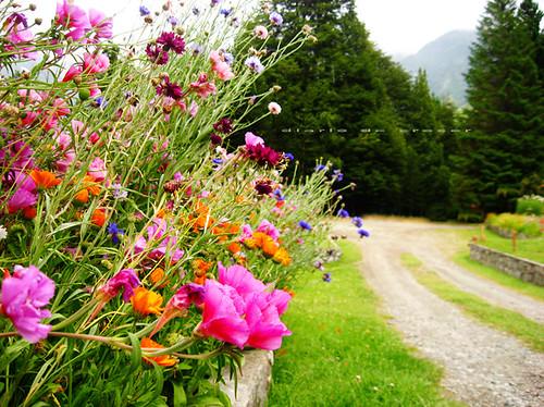 Flores de la Patagonia
