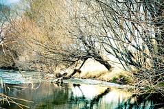 OREGON-9 (amy.martin51) Tags: bridge trees lake mountains reflection water rock reflections rocks painted hill bark streams paintedhills
