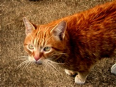 Gato elèctrico. (ericmartinezsanchez) Tags: top20colorpix