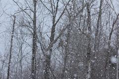 Sax Zim Bog (Rita Wiskowski) Tags: winter white snow storm cold minnesota evening woods dusk snowy north snowstorm meadowlands owl february greatgrayowl northern stlouiscounty saxzimbog saintlouiscounty