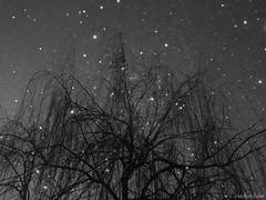 Starry Night (valemsk) Tags: light sky bw tree night dark star willow midnight flickraward