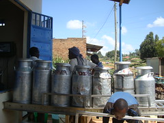 Farmers queue to deliver milk at Kabiyet Dairies. The dairy plant has been lauded as a successful agricultural venture