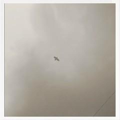 Bird pic #02