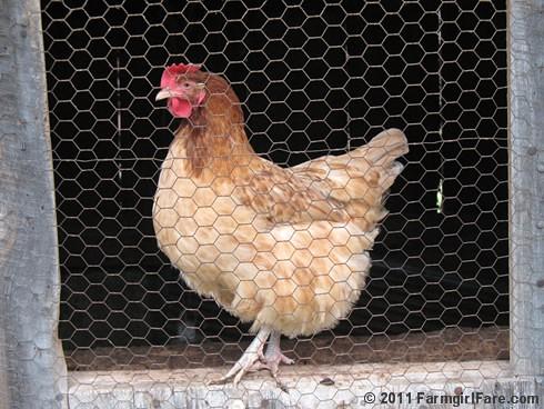 chickens 11