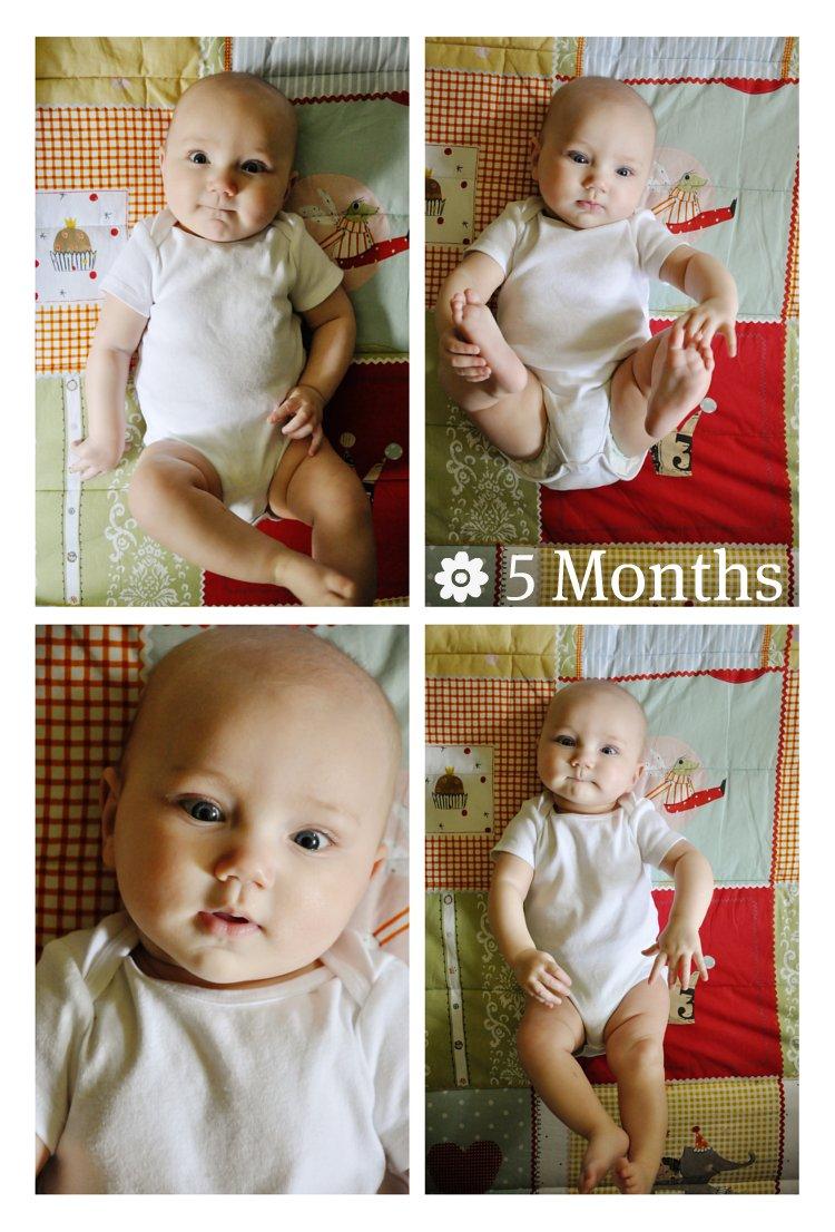 Lola ~ 5 Months