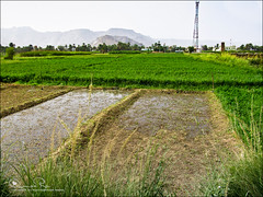 كل يوم نتعلم ♥ (Abeer Hussein) Tags: canon landscape is sx200