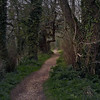 Path to Thomas Hardy's Home, Dorset (Rita Crane Photography) Tags: trees england texture nature beauty tag3 mystery taggedout forest spring tag2 tag1 path dorset layers consciousness dorchester ecosystem englishliterature ancienttrees wildnature southwestengland mayorofcasterbridge inwildnessisthepreservationoftheworld thepowerofnature tangledwood texturebyborealnz texturebyboccacino historicpath protectinglife pathtothomashardyshome olympuscamedia32