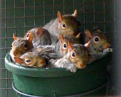A Bucket full of Squirrels (Justin Ash) Tags: baby cute squirrels basket many