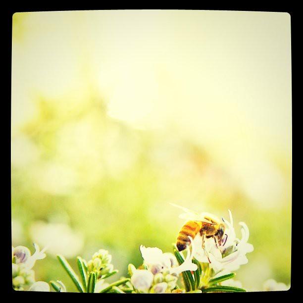 はたらき蜂