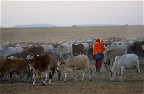 Masai and Herd by GeoffSJG