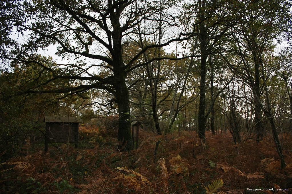 Un des nombreux petits bois de la Brenne