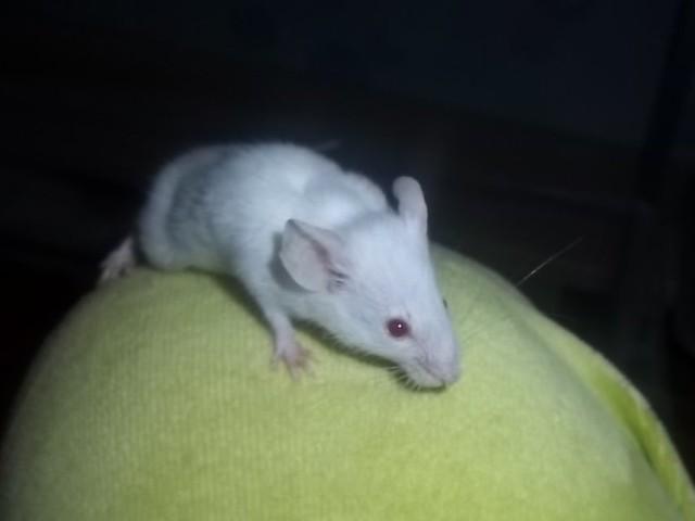 Estado de los ratones de Buscamos hogar 5542996155_eea8650a72_z