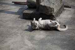 031_MG_9308_(001) (gym.king) Tags: pet cats pets animal cat kitten kittens planet choice   kittys   straykittens      kissablekat bestofcats  kittyschoice  catmoments  catswelove friendsofzeusphoebe