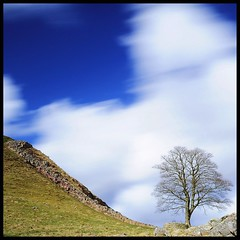 That Tree ( Marlene ) Tags: longexposure blue sky white tree nature wall clouds nikon rocks pov ghost northumberland stonewall curve slope hadrianswall romans divider hadrians romanhistory sycamoretree steelrigg sycamoregap d5000 robinhoodstree bigstopper 10stopper