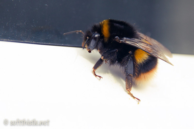 Busy Bee 82/365