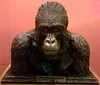 Carl Akeley's old Man of Mikeno, 1923 (JFGryphon) Tags: carlakeley americanmuseumofnaturalhistorynewyork