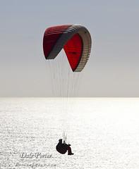 IMG_306_Paraglider_201103