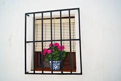 la ventana del geranio