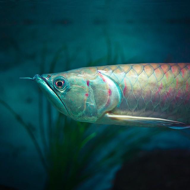 Nature Fish