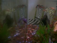 Fishtank & reflection