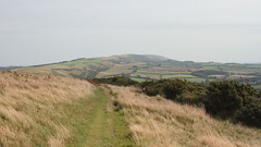 Distant Hills 0498 (Thorbard) Tags: dorset englanduk countryside landscape hill hills hillside walk hike gorse grass field overcast distant canonef40mmf28stm canon40mmpancake