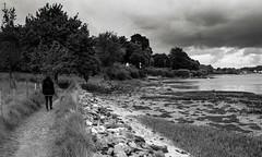 Golfe du Morbihan, B&W, 28 (Patrick.Raymond (5M views)) Tags: morbihan golfe mer littoral argentique tmax nikon beautifulphoto