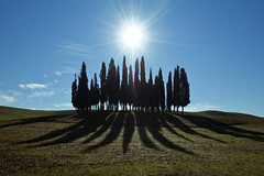 Controluce sulla collina dei cipressi - Backlight on the hill of cypresses (carlo tardani) Tags: panorama bronze backlight landscape campagna siena montalcino toscana inverno controluce gmt ambiente cipressi stagione allxpressus nikond300 bestcapturesaoi magicunicornverybest magicunicornmasterpiece tripleniceshot elitegalleryaoi mygearme mygearandmediamond flickrstruereflection2 flickrstruereflection3 flickrstruereflection4 flickrstruereflection5 flickrstruereflection6 flickrstruereflection7 flickrstruereflectionexcellence settembre2011challengewinnercontest trueexcellence1