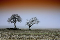 2 of many (D.Reichardt) Tags: trees winter mist cold nature field weather fog germany landscape europe alone quiet country filter lonely mystic cokin eos60d mygearandme dwcfflandscape