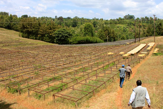Drying Tables at Kieni