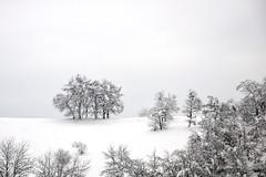 """alberi nella neve (luporosso) Tags: winter italy naturaleza snow nature landscape italia natura neve inverno paesaggi paesaggio naturalmente nikkor1685 """"nikonflickraward"""" luporosso nikond300s theauthorsplaza ¤gigilivornosfriends¤"""