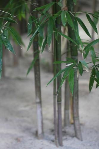 竹、和の息づかい / Scenery to feel Japan