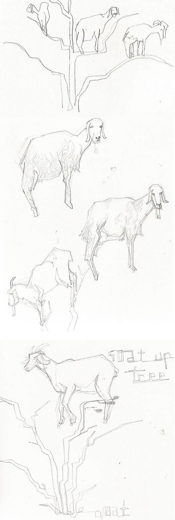 goat sketches