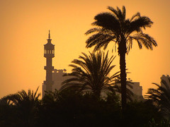In Search of a Peaceful Transition (Sandra Leidholdt) Tags: tower silhouette architecture hope freedom peace minaret islam egypt silhouettes peaceful palmtrees cairo revolution change transition liberation gypten minarets egypte islamic egito     arabrepublicofegypt sandraleidholdt  sandyleidholdt