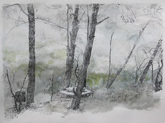 4 -  12.2010 (Hava Matzkin Eilam Art) Tags: trees art nature fire picnic drawing air carmel portfolio  hava  eilam    matzkin