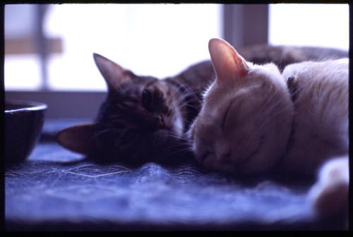 chiro & nana
