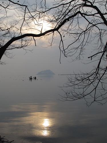 110207 琵琶湖 湖北みずどり