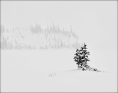 Haiku (Irena Portfolio) Tags: trees winter snow artbook winterscenes extraordinarilyimpressive