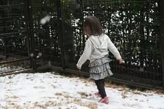 雪なので走ります