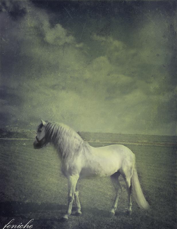 caballo blanco 2
