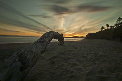 Day 51/365: Lead Me (Lisa Asil) Tags: ocean california longexposure sunset beach santabarbara landscape evening sand 365 day51 fallentree montecito butterflybeach weldingglass project365 51365 mostly365 project36612011 2011yip 3652011 2011inphotos 2011220