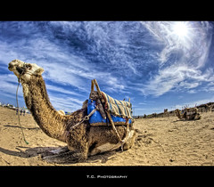Dromedary (iPh4n70M) Tags: africa blue sky beach clouds photography photo sand nikon photographer photographie north sable du dromedary fisheye bleu camel ciel morocco photograph maroc tc nikkor nuages 16mm plage essaouira hdr nord afrique mogador photographe dromadaire chameau 9xp d700 9raw tcphotography ph4n70m iph4n70m tcphotographie