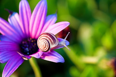 Almost spring... (Theophilos) Tags: light flower nature bokeh snail greece crete rethymno