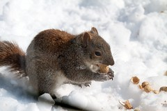 Deck life squirrel 2