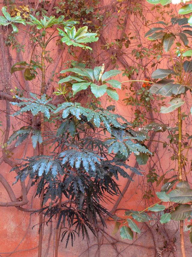 Plants at Posada Carmina