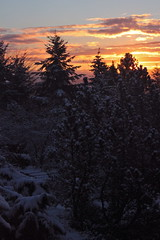 Friday: The Cold Light of Dawn (jchants) Tags: pink blue trees winter orange sun snow cold clouds sunrise dawn february
