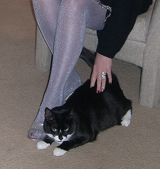 My legs and my black and white Italian cat. (Sugarbarre2) Tags: show city winter red people urban woman usa house hot cold cute male nature beautiful fashion animal animals self fur mom fun high cool nikon feline toes hand image photos sweet fingers pussy silk s babe wife upskirt heels granny