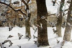 (king David Israel) Tags: blue white snow newyork black rome berlin bird london nature landscape dove    melilla