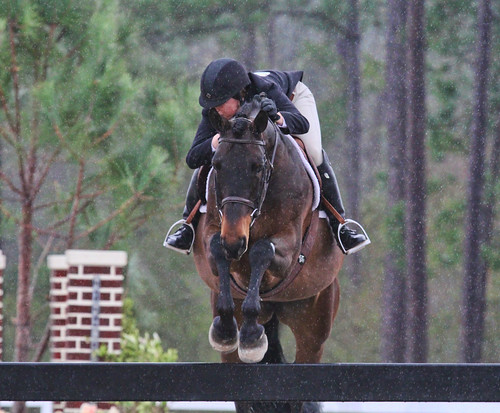 Hunter Jumper, hunter judge scoring, hunter scoring, major hunter erroros, horse training, horse training ontario, hunter judge, hunter judge ontario, hunter judge canada, hunter judge USA, Laura Kelland-May